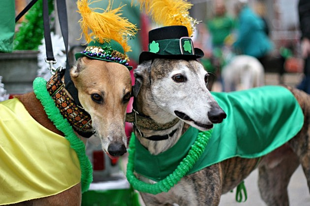 Dogs dressed for parade