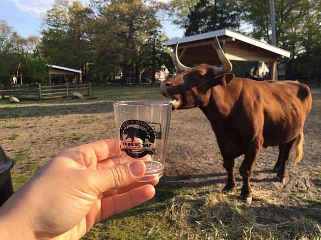bull brew