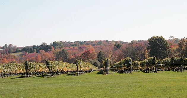 Stonington Vineyard