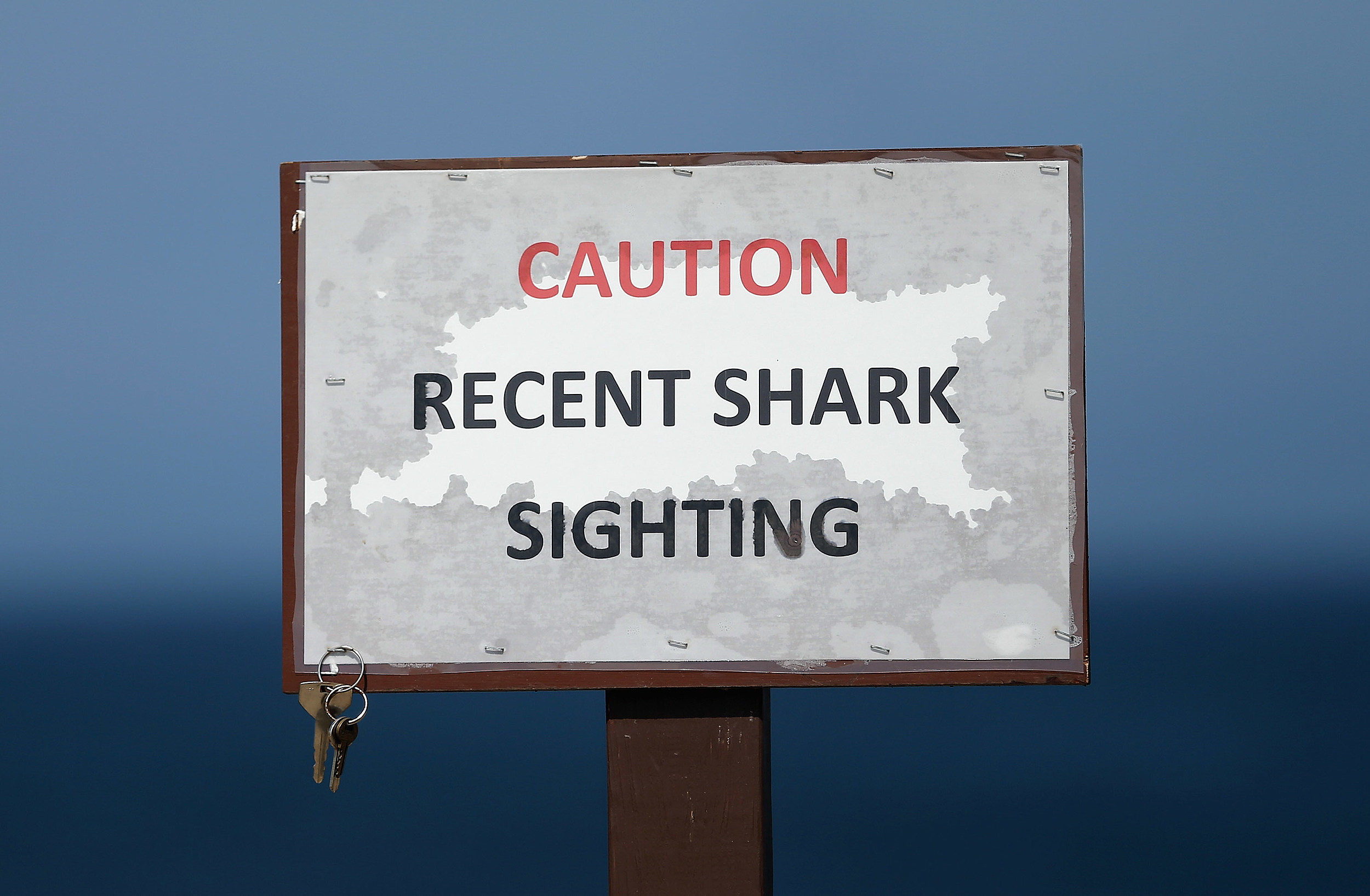 Increased Shark Sightings Along Cape Cod Coast Linked To Seal Population Growth